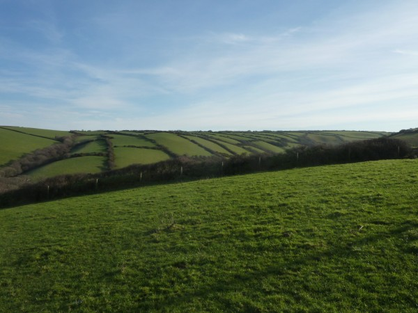 old field system in january blue skies 600 x 450