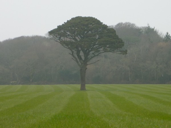 lone tree near penwarne