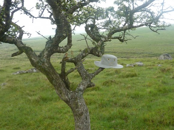 phoca thumb l tilley on tree dartmoor 2
